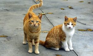 Two orange cats standing and sitting on pavement surrounded by fallen leaves