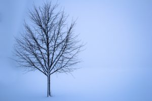 Tree standing in a snowy field. The tree has some snow covering its branches.