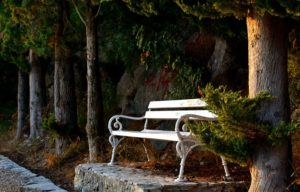 A white bench sitting on a slab of concrete at the edge of a pine forest.