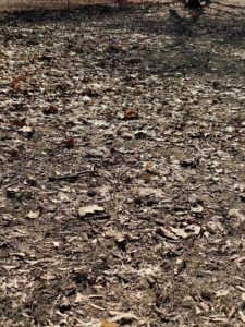 Dead leaves on the ground.