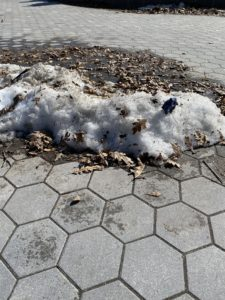 A dirty patch of snow on a sidewalk. There is a blue glove and many leaves stuck in the snow.
