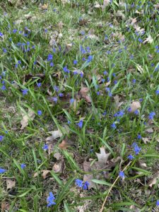Blue flowers growing in a park.