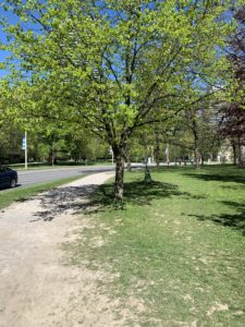 Photo of a dirt jogging trail at a park. It is flanked by vibrant, green trees that have recently awoken from their winter dormancy.