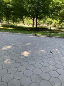 A sun dappled sidewalk in a park. There is an empty bench in the background.
