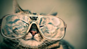 A cat wearing a pair of oversized glasses