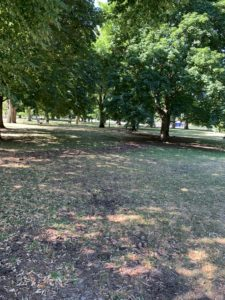 A sun-dappled park. The grass is heavily shaded by the leaves of the enormous trees growing there.