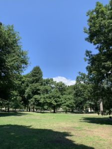 Green trees and a grass clearing in a park. There are white clouds peeking up over the trees in the background.