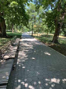A cobblestone-like sidewalk in a park. The sidewalk is heavily shaded by large oak trees.