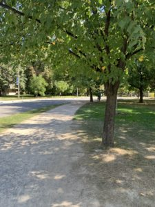 A tree-lined running path in a park.