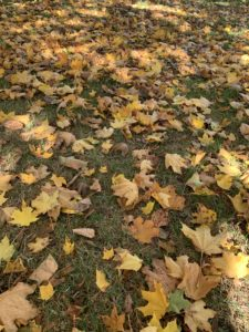 Dozens of leaves lying on a grassy patch of land.
