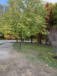 A somewhat damp running trail at a park. It is flanked by trees whose leaves are just beginning to turn from green to yellow