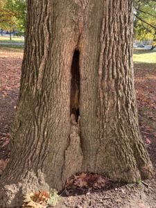 A friendly hole in the trunk of a tree.