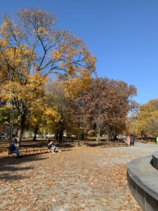 A shot of a plaza in a park that is lined by trees who have lost about half of their leaves.