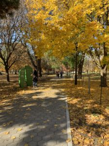 A cobbled path in a park that is lined by bright yellow trees in their full autumn splendour.