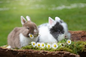 two bunnies eating daisies while sitting on a tree stump