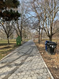 A sidewalk in a park flanked by dormant, bare trees. The grass next to the sidewalk is covered in a thick layer of brown leaves.
