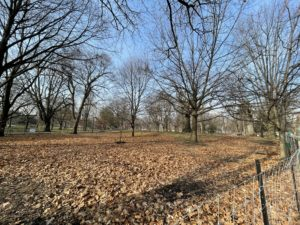 A landscape shot of trees in a park who have all lost their leaves and gone dormant.