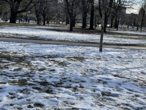 Snow lying on the grass in an urban park.