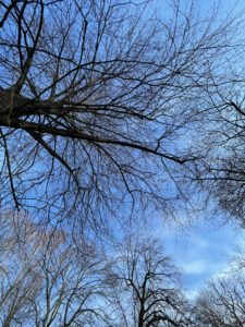 A skyward shot of bare tree branches against an overcast but somewhat blue sky
