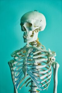 Photo of human skeleton in a teaching lab