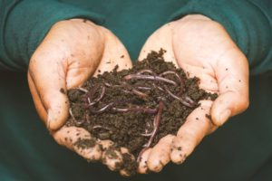 cupped hands holding soil and earthworms