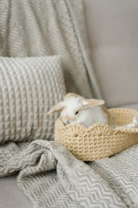 Brown and white bunny in a wicker basket on a bed