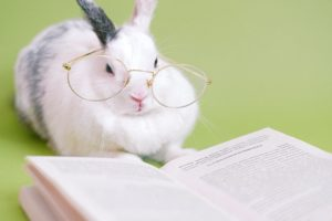 Rabbit wearing glasses and sitting next to an opened book