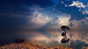 A tree and some dark clouds reflected in a perfectly still body of water. There are also some stones on the beach in the foreground of the shot.