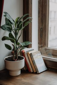 Stack of books leaning up against a wall. They're between a window and a potted plant.