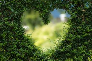A heart shape cut out of a thick green hedge.
