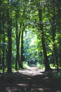 A shady dirt path in a forest. It is surrounded by vibrant green trees.